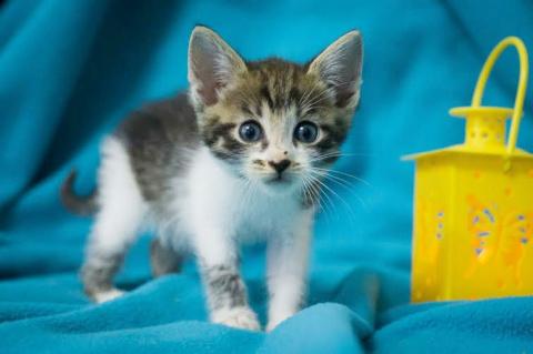 Пятничный котенок Ося – вдох…