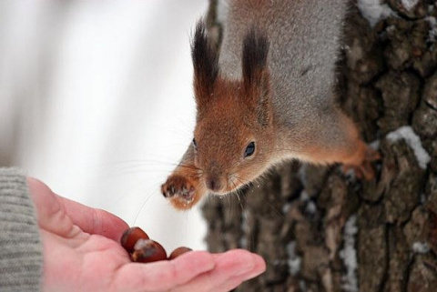Некоторые виды орехов для белок смертельно опасны!