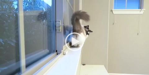 Лунная походка от кота Альберта