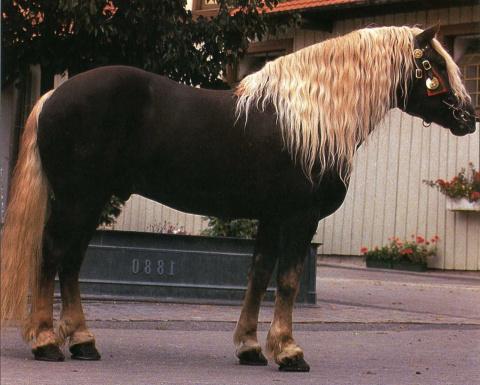 исполнят породы лошадей фото с названиями по алфавиту горячее