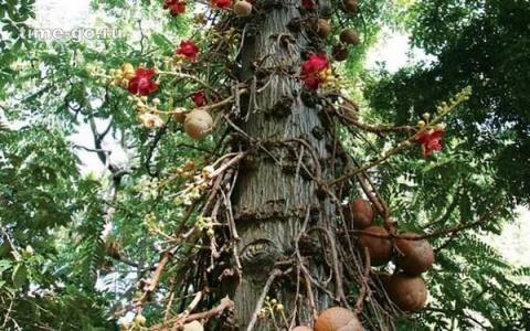 Безумно красивые деревья со …