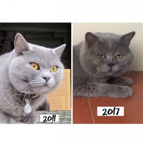 Бродяга-кот через шесть лет …