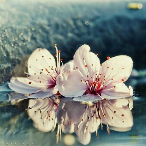 В мире цветущей нежности