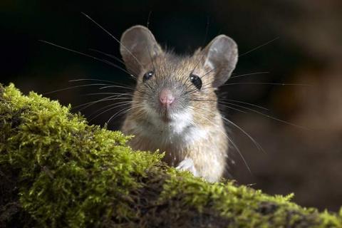 То ли мыши мутировали, то ли колготки уже не те…