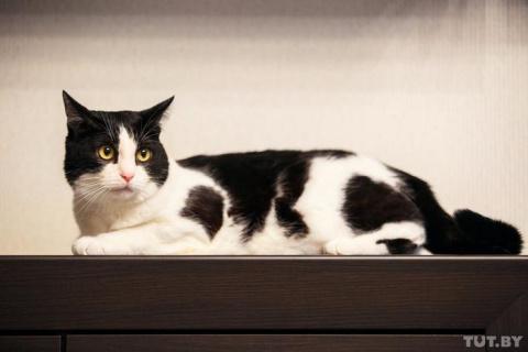 Самый популярный белорусский кот: как Пусик стал звездой YouTube