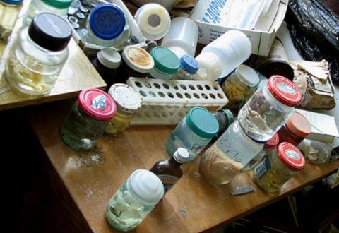 Эмбрионы в брошенной лаборатории возле Чернобыля много лет пылились без присмотра...