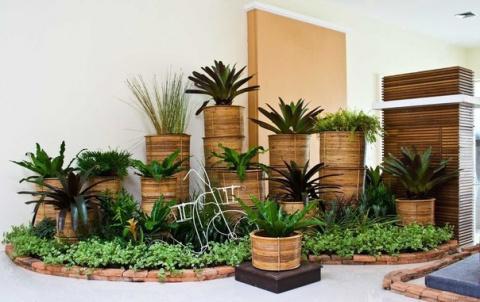 10 растений, которые принесу…