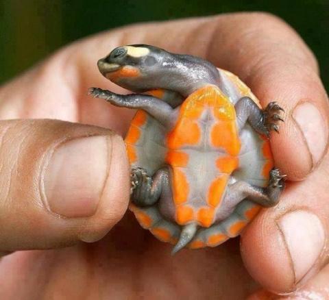 Причуды в мире черепах