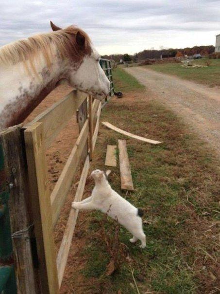 Дружба лошади с котом