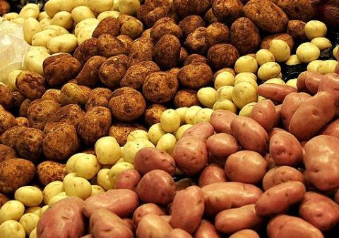 Новые сорта картофеля: испытано на себе