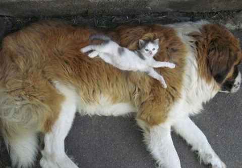 20 котов, которые думают, чт…