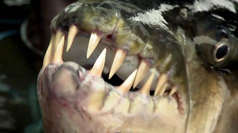 Известный рыбак Джереми Уэйд поймал редкую и опасную рыбу