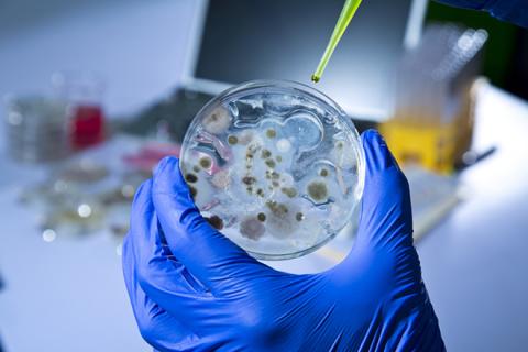 Глубоководная бактерия «побо…