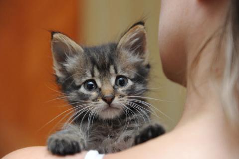 7 советов тем, кто подобрал котенка.