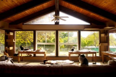 Более 700 кошек дружно живут в этом удивительном доме