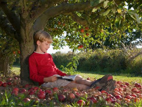Этот мальчик каждый день приходил к яблоне. Но когда он вырос, случилось непоправимое...