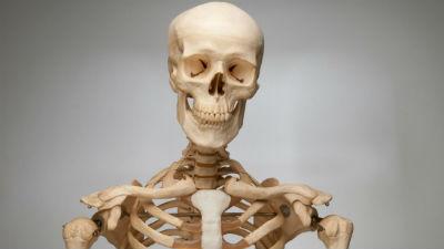 На юге Москвы прохожий обнаружил человеческий скелет