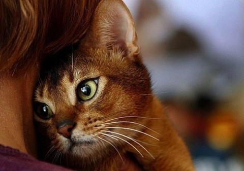 Кот погиб, спасая хозяина