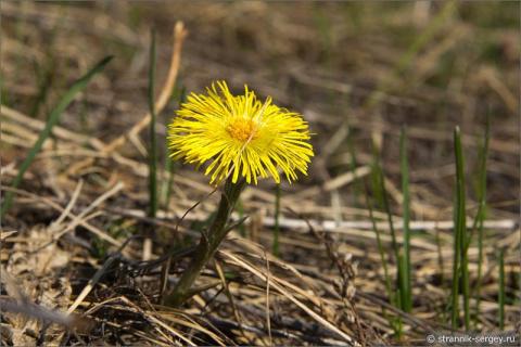 Легенда о первом цветке