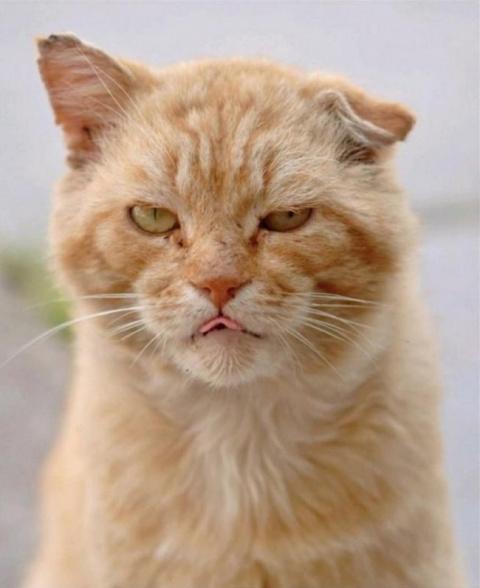 20 суровых дворовых котов