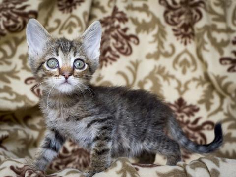 Пятничный котенок Хорхе: сам…