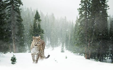 """На """"Земле леопарда"""" создали реестр браконьеров"""