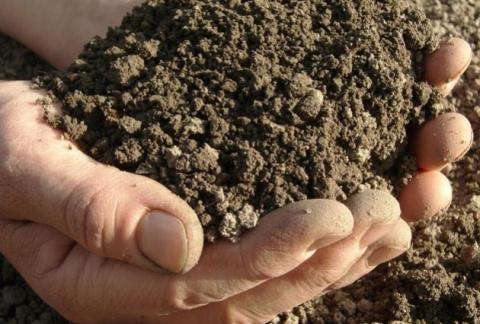 2 способа проготовления почвы для рассады: позаботимся об этом летом