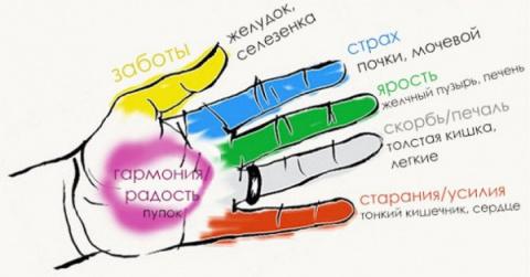 Как улучшить состояние определенных органов тела с помощью пальцев рук