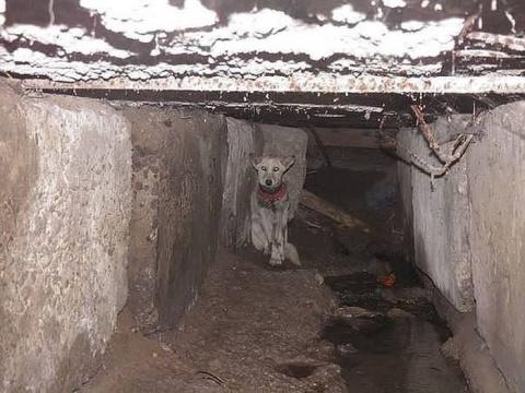 Как спасали собаку по кличке…