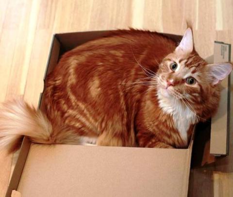 "Девиз моего кота Матвея — ""р…"