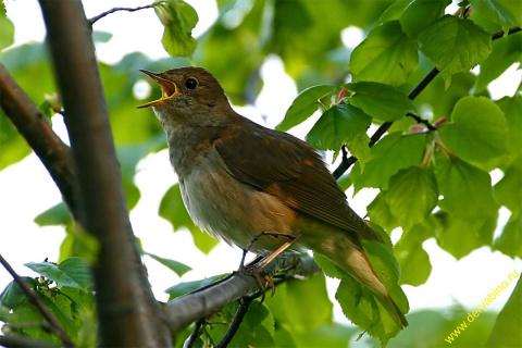 Определяем время по птицам