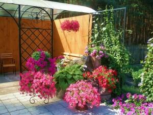 Цветы для вазонов: маленькие…