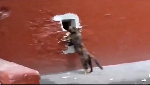Кот крадет рыбу - до чего прикольное видео!