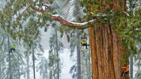 Этому дереву 3200 лет, и его еще никому никогда не удавалось запечатлеть целиком. До этого момента...