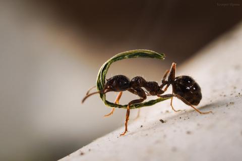 Муха и муравьи - удивительная история