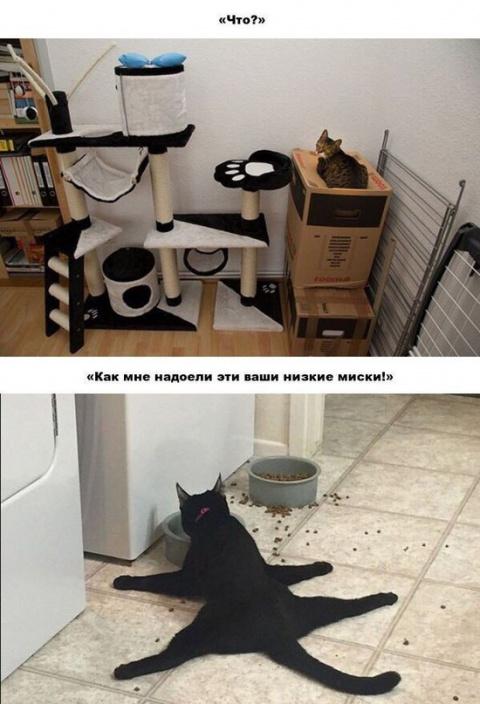 КОШКИН ДОМ. Железная кошачья логика