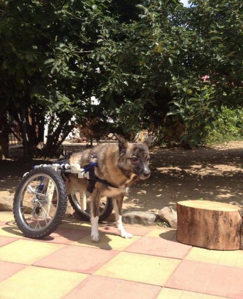 Животные -инвалиды. Найда ищет поддержку.