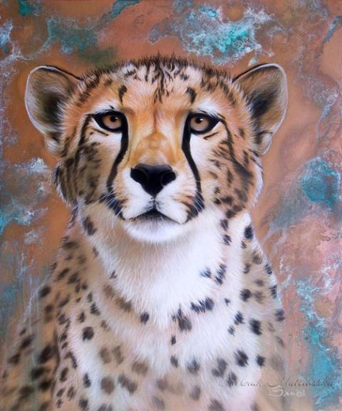 Необыкновенные портреты животных Sandi Baker