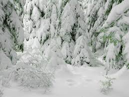 """""""Выживание"""" зимой в лесу. БЕ…"""