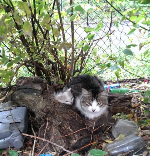 Домик для мамы и её котёнка(6 фото)