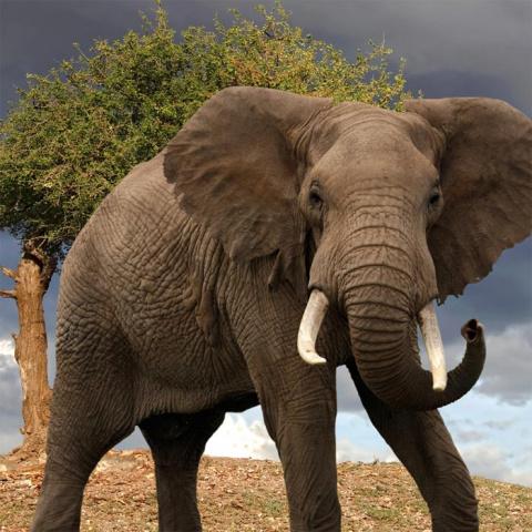 Сравнивая человека с животным, мы часто незаслуженно обижаем их