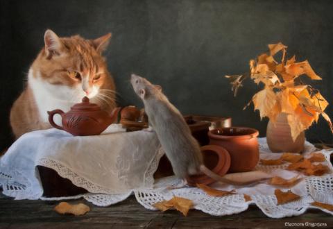 «Кошки-мышки»  рижского фотографа Элеоноры Григорьевой