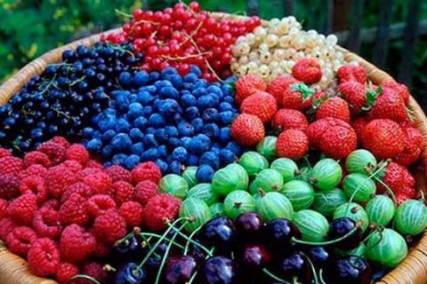 Стало известно какие ягоды с…