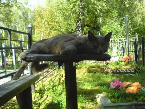 Кот Барсик 3 года прожил на могиле своего хозяина...