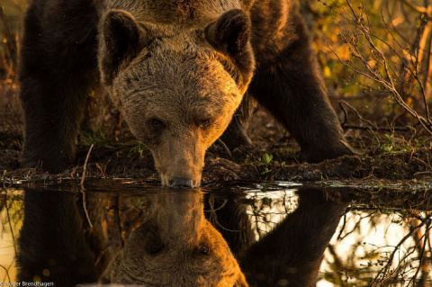 Животный мир Скандинавского полуострова