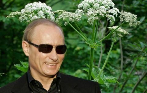 Путин виноват в зарослях борщевика в Британии