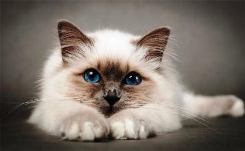 Про нашу любимицу Плюшу — казалось, что это не кошка, а ангел, посланный небесами...