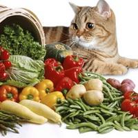 КОШКИН ДОМ. Кошка и вегетарианская диета