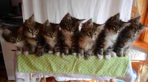 Трогательные и милые котята