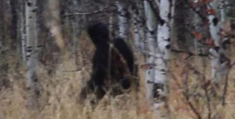 Охотник заснял в лесу черное существо. Йети?